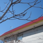 پیشانی ساختمان-0039